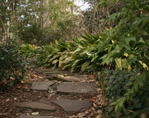 Vibrant Path [Athens, GA]