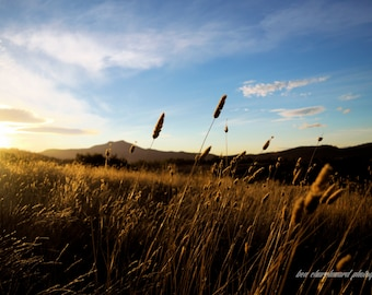 Sunset Field. Colour landscape photography art print.