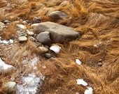 Grass and Snow along costal Maine - Limited edition photography print -