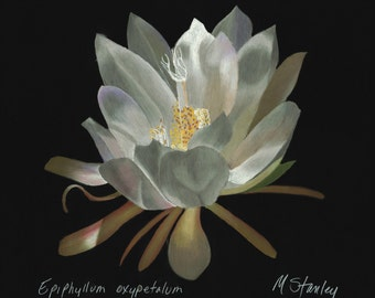 Print of an original pastel drawing of a night blooming cereus