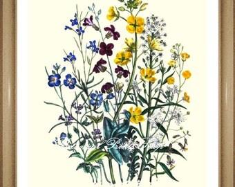 "Botanical Print. Flower Print. Arabis. Floral wall Art. Botanical Wall Art. 5x7"", 8x10"" 11x14"""