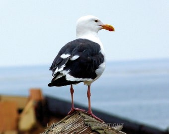 Seagull on the rooftop