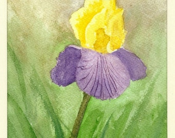 Yellow and Purple Iris....Original Watercolor Painting