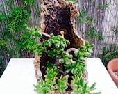Natural bark planter