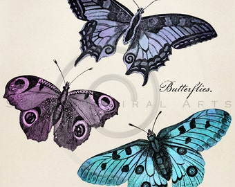 Vintage Butterfly Illustration Printable Butterflies 1800s Antique Butterfly Print Instant Download Digital Image Clip Art Retro Drawing ZS