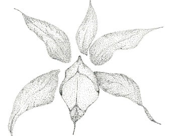 Pen & Ink Iris Art