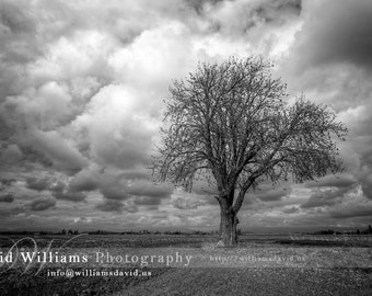 The Lone Tree, Black and White Photographic Print. Photo, Photography. 11x14, 12x18, 16x20, 16x24, 20x24, 20x30