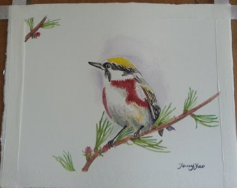 Original water color painting, bird on branch, 11x9 in, yellow, red, branch, animal