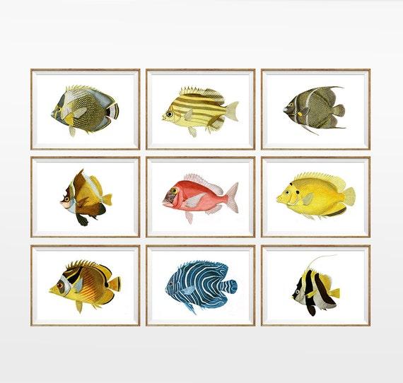 Fish Aquarium Antique Art Print Set Of 9 A4 By Antiquewalldecor
