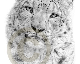 Snow Leopard pencil drawing print - A4 size - artwork signed by artist Gary Tymon - Ltd Ed 50 prints only - pencil portrait