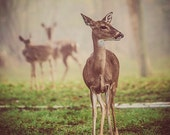 Deer Photography - Animals - Wildlife Print - Nature Decor - Texas - Fog Photo - Brown and Green