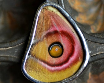 Real Moth Wing Necklace Antheraea suraka