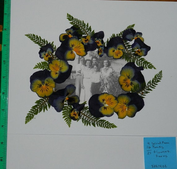 Real pressed dried flowers 25 pansy viola with ferns ready for for Dried flowers craft supplies