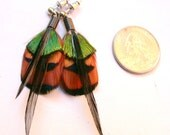 Striking Natural Feather Earrings with Surgical Steel Posts- All Natural Colors- Ready to Ship