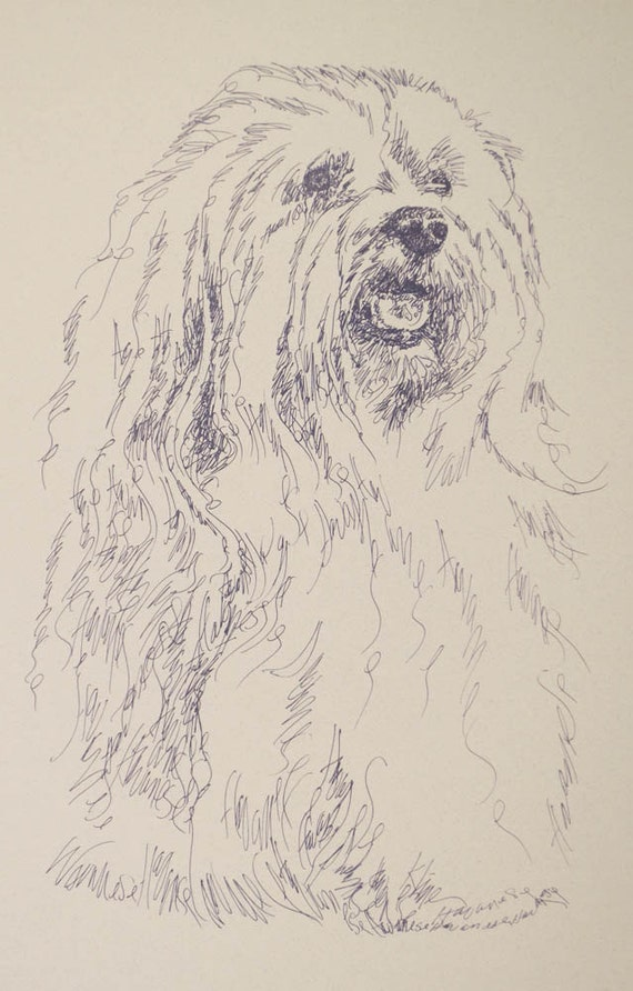 Havanese dog art portrait drawing from words. Your dog's name added into art FREE. Great gift. Signed Kline 11X17 Lithograph 41/500.