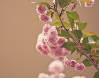 Pink Floral Photography Print - Pastel Pink and Brown Flower Home Decor Print