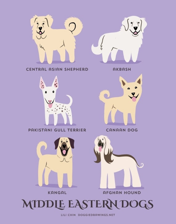 MIDDLE EASTERN DOGS art print (dog breeds from Central & Western Asia)