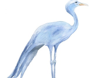 Blue Crane Watercolor Painting - Giclee Print - 8 x 10 - Bird Painting - South Africa 8.5 x 11