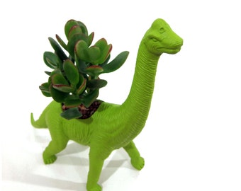 George the PLANTED Brachiosaurus - the Original Toy Planter