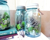 Live Blue Mason Jar Moss Terrarium,  with Pine Cone and Antique Key, Rustic Decor
