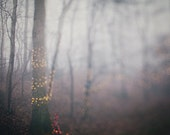 """Foggy Landscape Photography- Haunting Eerie Nature- Lights - Dreamy Blur - Affordable Home Decor - Fine Art Photography  - """"Foggy Holiday"""""""