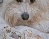 Havanese dog brooch - cream and brown, cream and ginger or cream and white with turquoise border