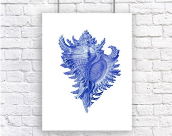Large Conch Shell Blue Nautical Vintage Style Art Print Beach House Decor