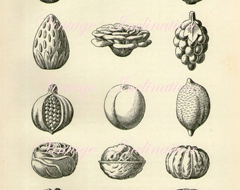 1907 Moulded Ices and Puddings original antique food print
