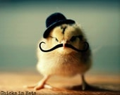 Photo Print 8x10 Chick Wearing A Derby Hat And Mustache Photograph