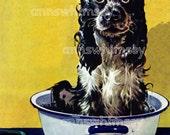 Dog Art - Cocker Spaniel - Butch Takes a Bath - 1940s Restored Antique Art - Restored Vintage Art - Cocker Spaniel in Bath Tub