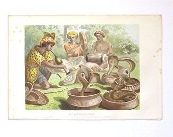 Antique 1883 chromolithography Brehm's Tierleben animal print Brillenschlange cobra snake