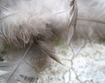 Nature Photography - Angels Feathers Fine Art Photograph - 8x10