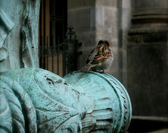 Bird Photography, Berlin, Germany, Europe, Teal, Turquoise, Travel Photography, fPOE, Perch