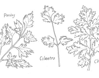 Parsley, Cilantro and Chervil print, black and white