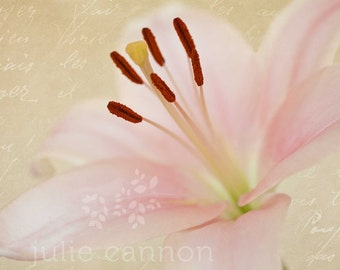 Pastel pink lily photography print with french text overlay