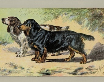 Spaniel Dogs Art Print - Antique Lithograph C.1907 France - Wall Hanging, Home Decor, Dog Gift - Pet Art, Hunting Dogs, Ready to Frame 11x14