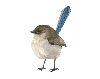 Brown and Blue Fairy Wren - Watercolor Bird Print