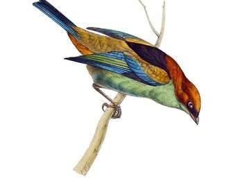 Bird Graphic - High Resolution Digital Download No.133