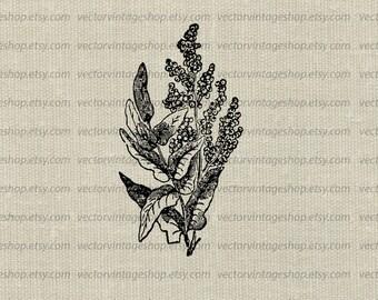 Flower Vector Graphic Plant, Flowering Fern Clipart, Instant Download Vintage Style Victorian Nature Illustration WEB1740AJ