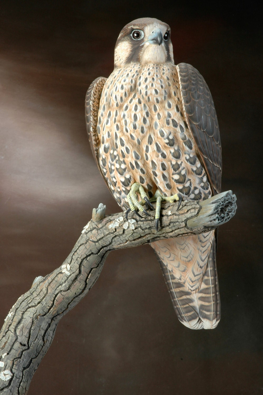 Immature peregrine falcon lifesize wildfowl wood carving