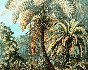 Nature art image download, Ernst Haeckel, vintage illustration, high resolution -- item no 85