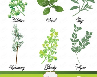 Fragrant CULINARY HERBS Digital Clipart, Scrapbooking, Cooking, Gardening Clipart, Plants, Menus, Labels, Digital Collage