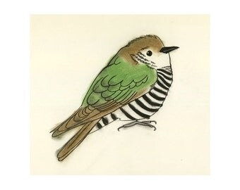 "Cuckoo bird art print - Clyde the Cuckoo - 4"" X 6"" print - 4 for 3 Sale"