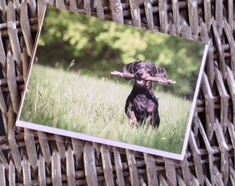 Mini dachshund / sausage dog / weiner dog blank greeting card
