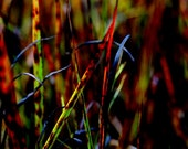 Vivid and Colorful Nature Photography - Abstract