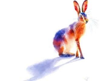 Sunlit Hare - 19x13 inch Limited Edition Wildlife Print