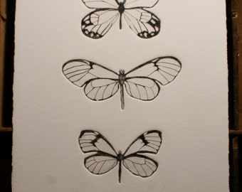 Glass Wings - butterfly etching print