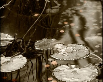 Abstract Sepia Copper Lily Pad Pond--Penny Wishes--Fine Art