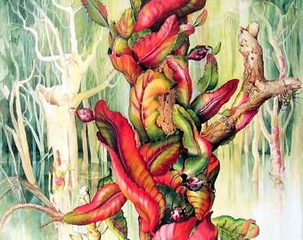 Cactus Flower Print  - Selenicereus wittii Cactus - Margaret Mee 1989 Vintage Book Page 11 x 9