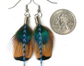 Striking Pheasant Feather Earrings- Ready to Ship